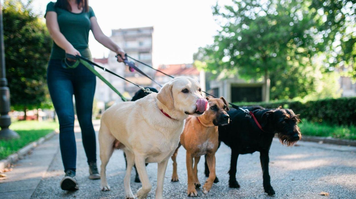Side Gigs for Teachers - Dog Walking