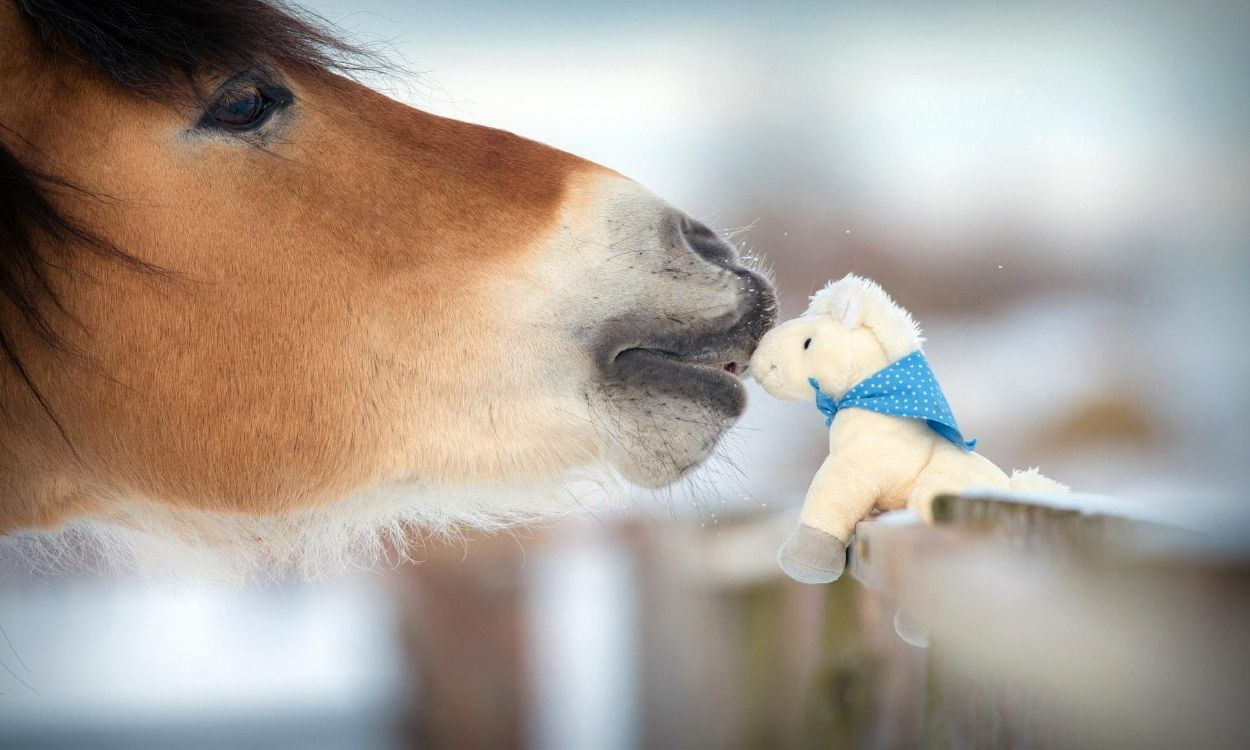 best horse toys for boys