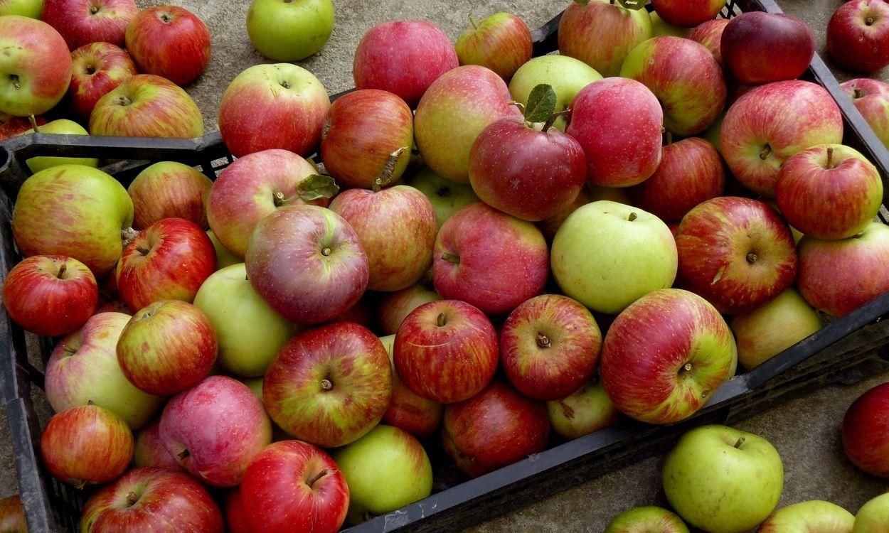 reasons-teachers-get-apples